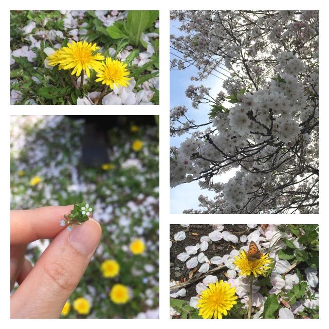 お花見風景