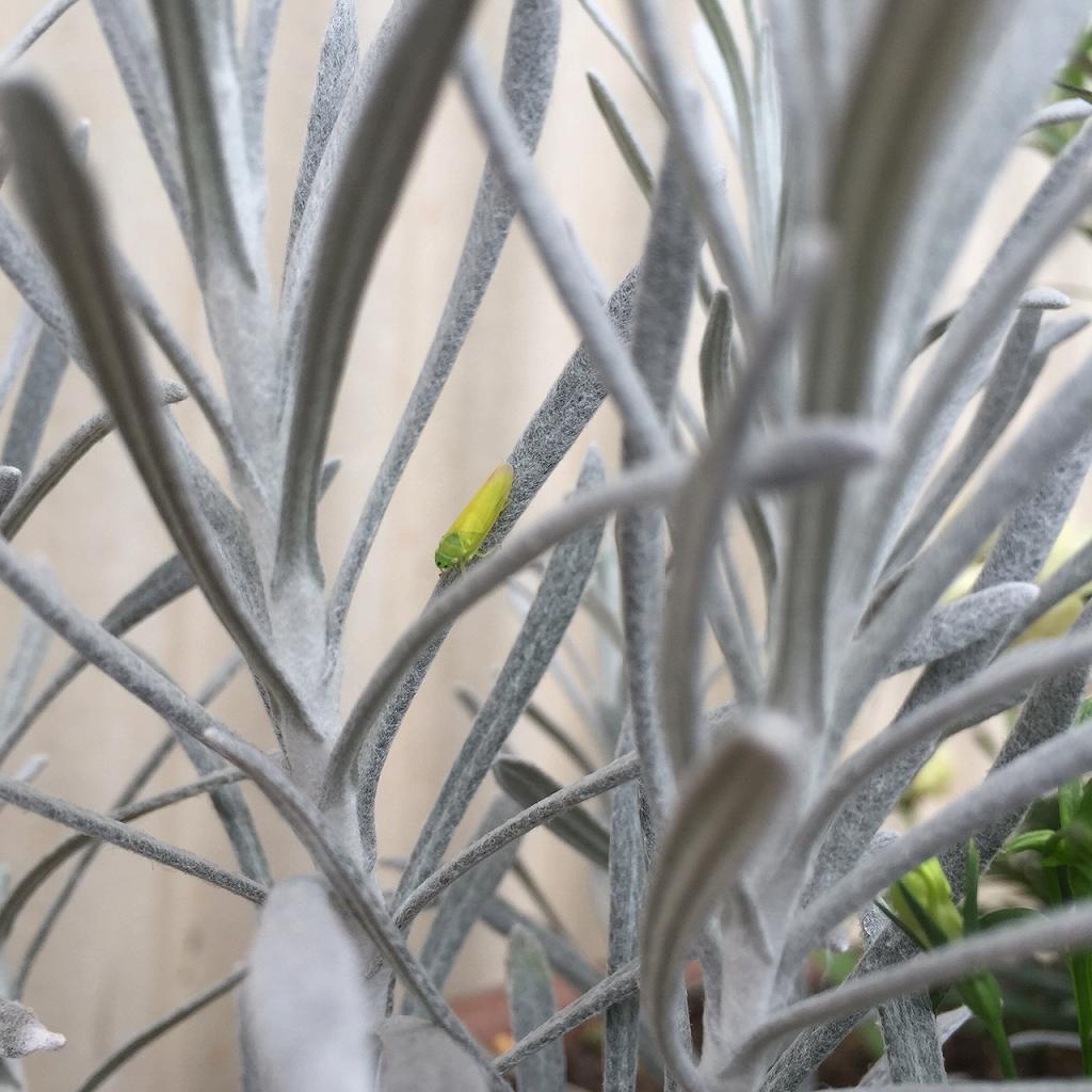 工房の鉢植え
