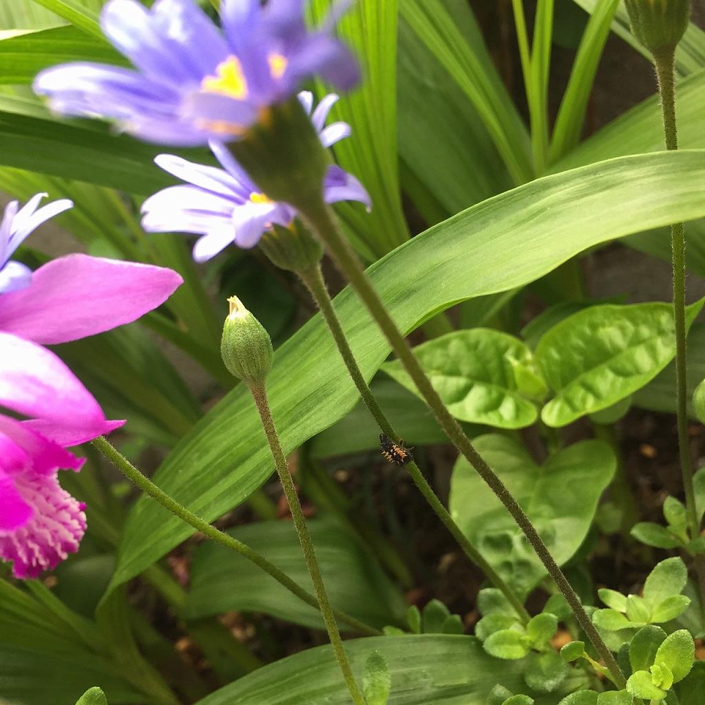 工房の花壇のお花