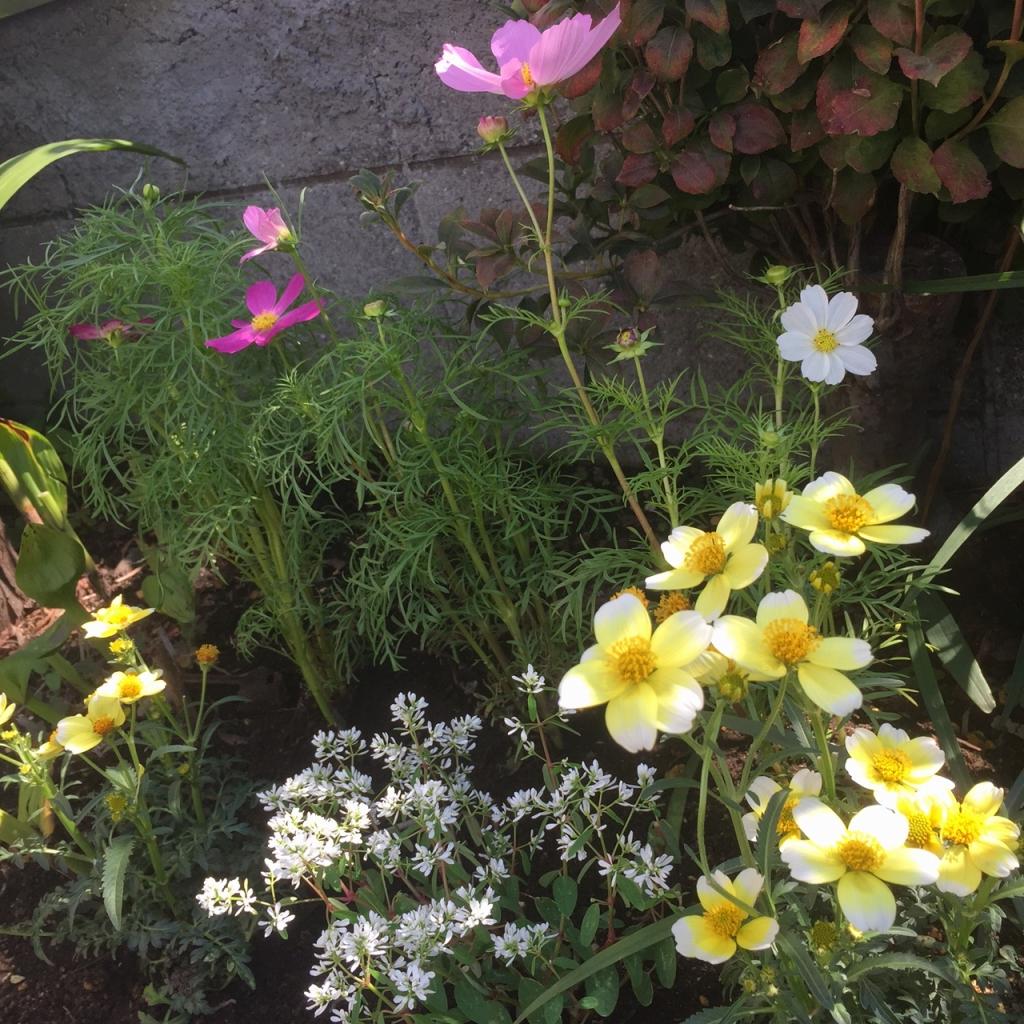 工房の花壇