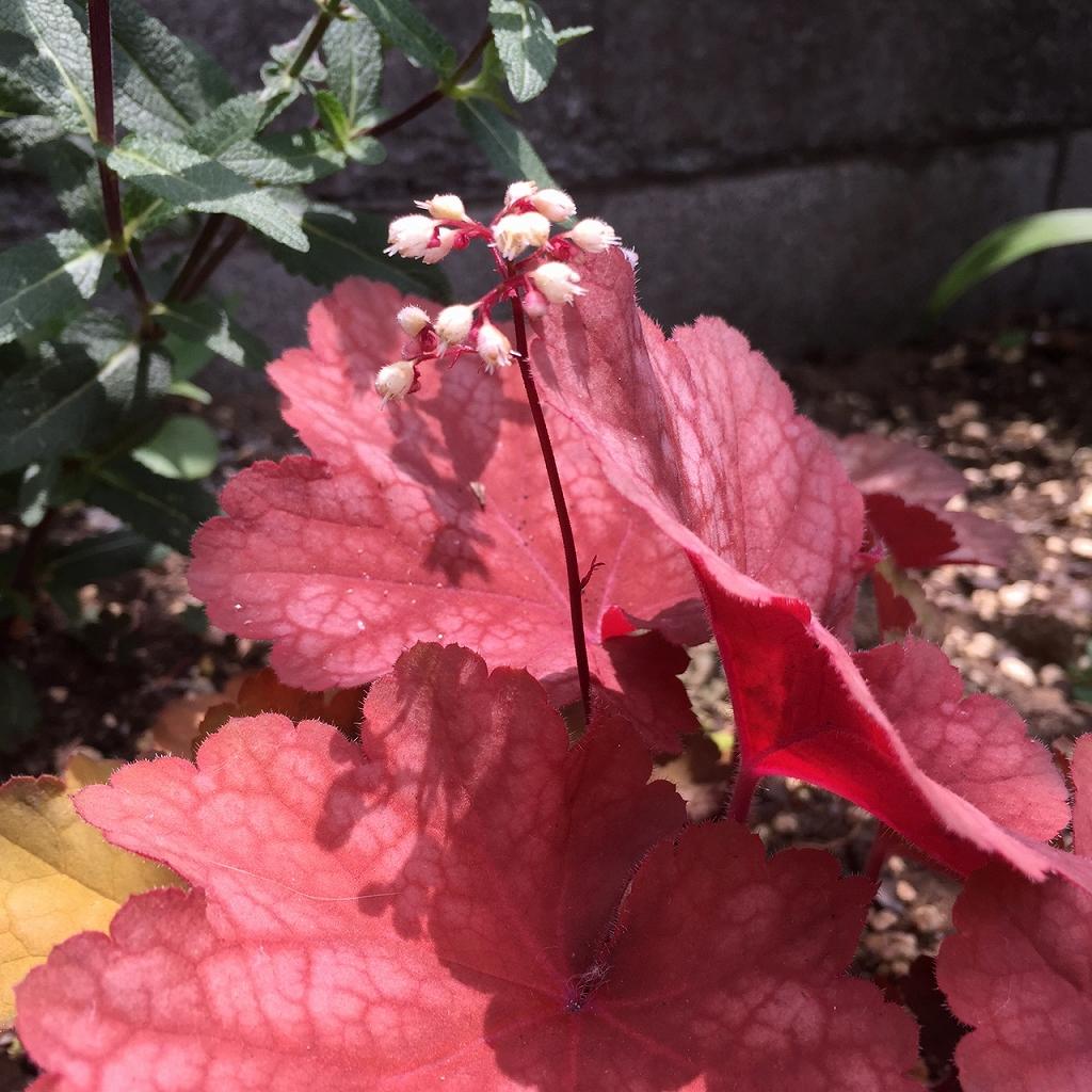 ロートアイアンの花壇