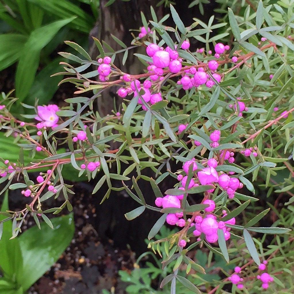 工房の花壇の花
